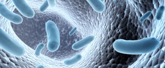 Τι είναι τα προβιοτικά και τί προσφέρουν;
