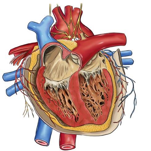 Ενδοκαρδίτιδα-δείτε πώς αντιμετωπίζεται!