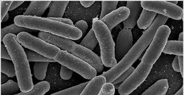 Βακτηριακή-γαστρεντερίτιδα-δείτε πώς αντιμετωπίζεται