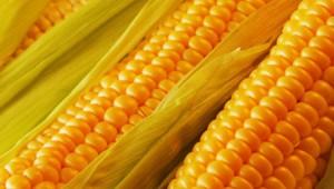 Καλαμπόκι: ένας κίτρινος θησαυρός στο πιάτο μας