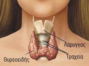 θυρεοειδής
